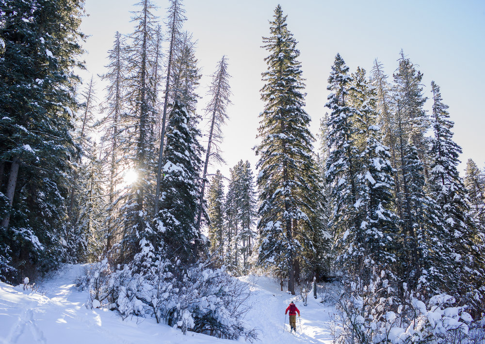 Exploring the Custer Gallatin National Forest in winter. (Photo Louise Johns.)