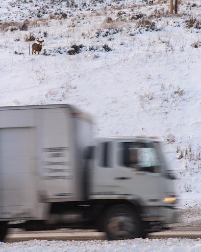 A mule deer buck above a busy highway. (Photo Josh Metten/Jackson Hole EcoTour Adventures.)