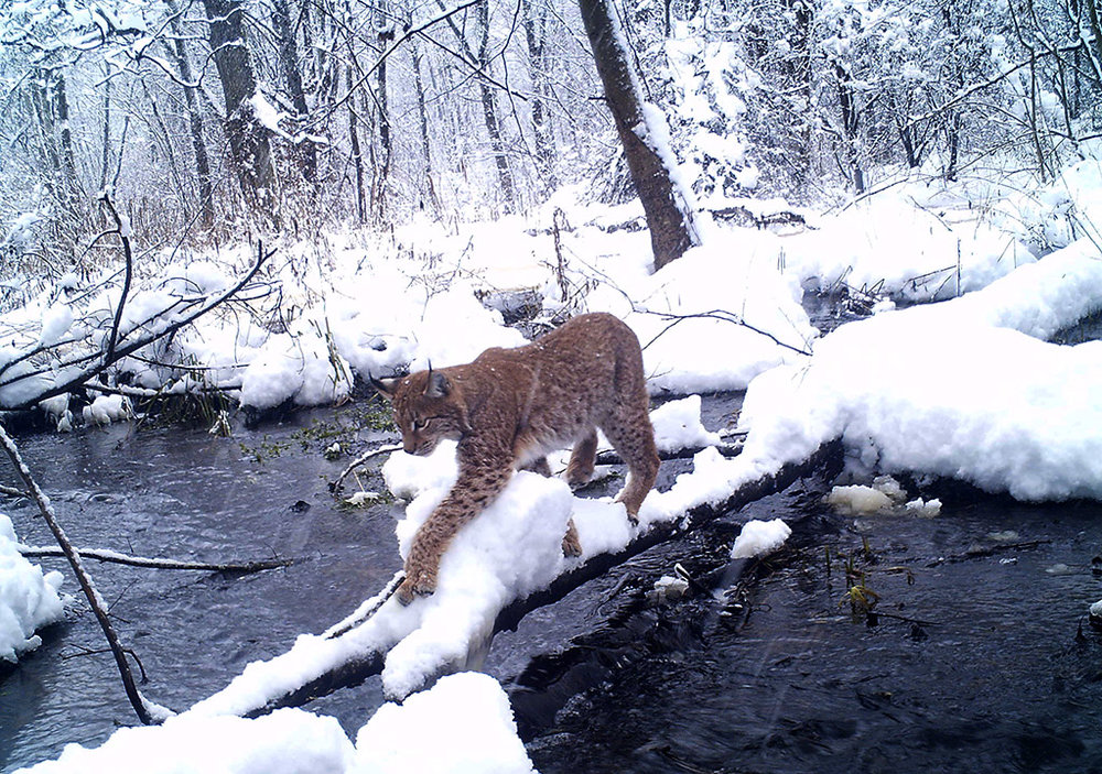 chernobyl-wildlife-camera-traps3.jpg