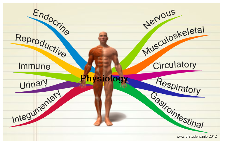 Exercise Physiology 260 - This class focuses on basic energy metabolism at rest and during exercise
