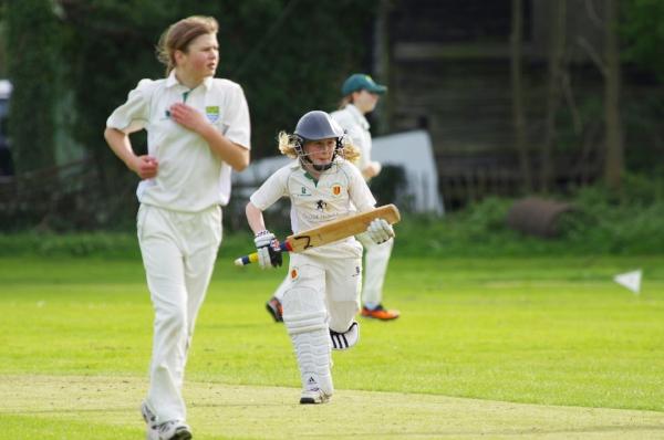 cricket-724622_1920.jpg