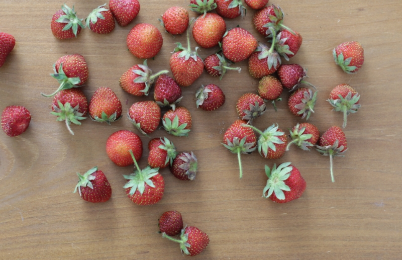 Strawberry Gelato l yummytoddlerfood.com