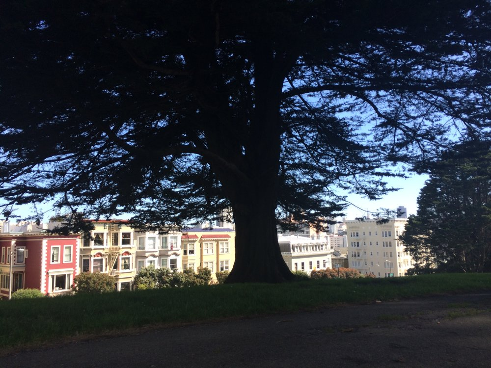 This is a picture from the San Francisco trip I mentioned in this blog. I sat on a park bench and talked to my aunt for hours about life and how confused I was.
