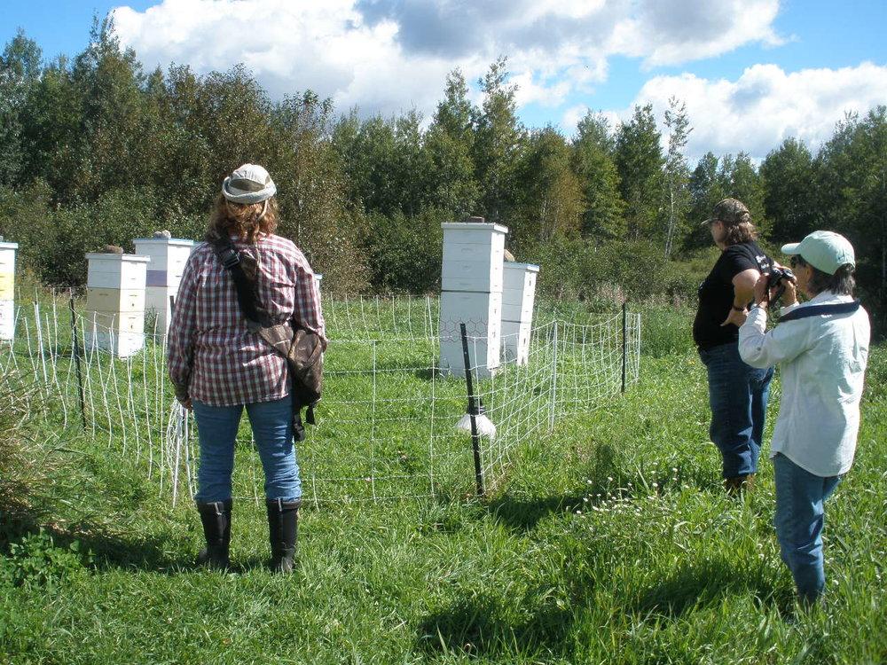 7a Gail Bong, Darla Van Heerde & Eileen Schantz-Hansen - bee hives.JPG