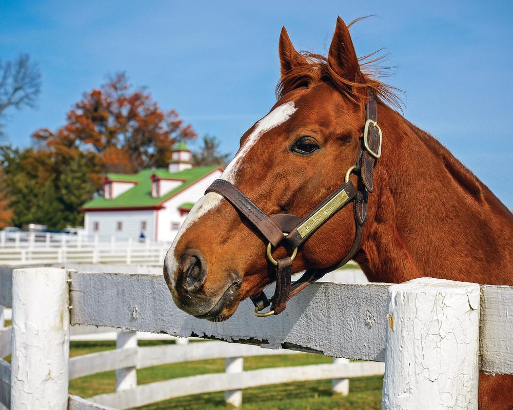 chestnut-horse-leaning-over-white fence