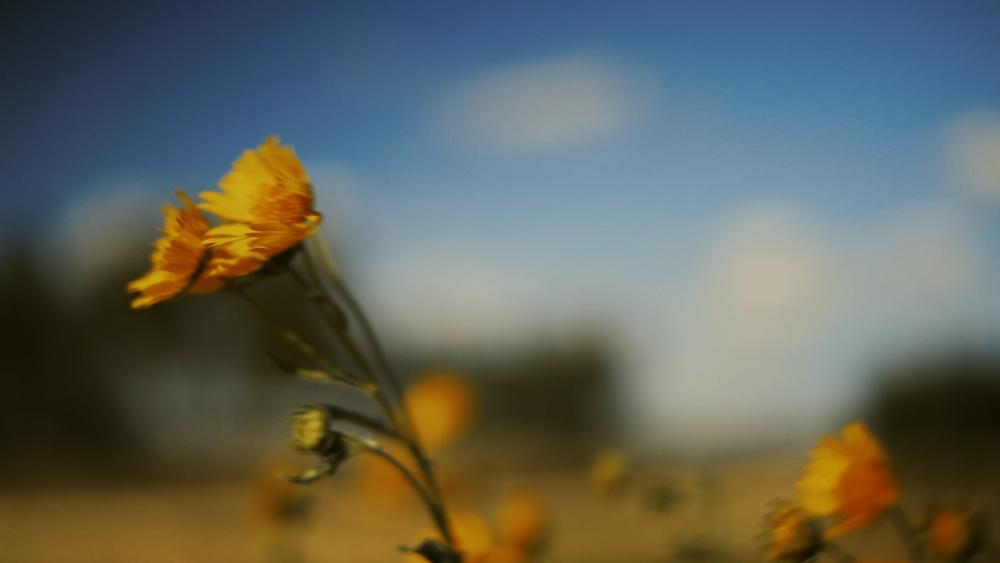 Estrella Ranch.00_00_14_00801.Still007.jpg