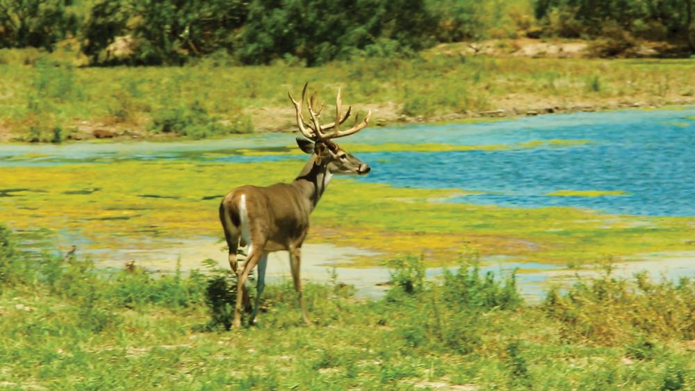 Estrella Ranch.00_01_15_35751.Still035-EDIT.jpg