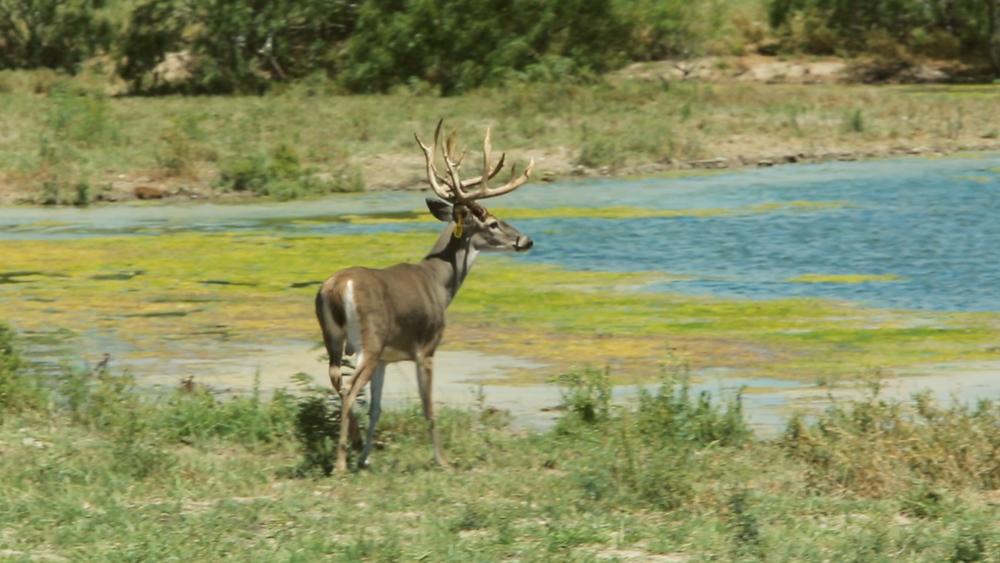 Estrella Ranch.00_01_15_35751.Still036.jpg