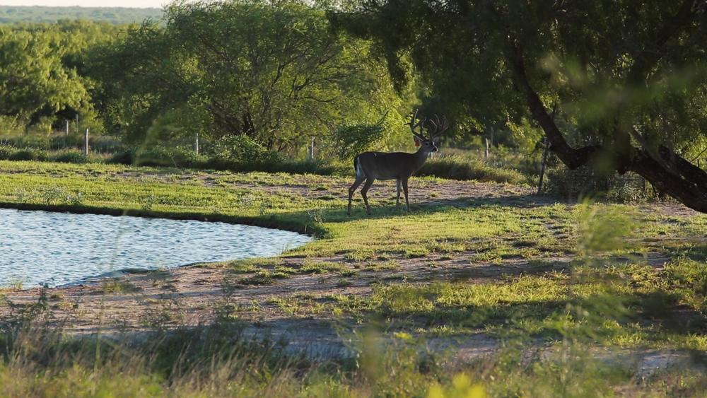 Estrella Ranch.00_01_29_40030.Still039.jpg