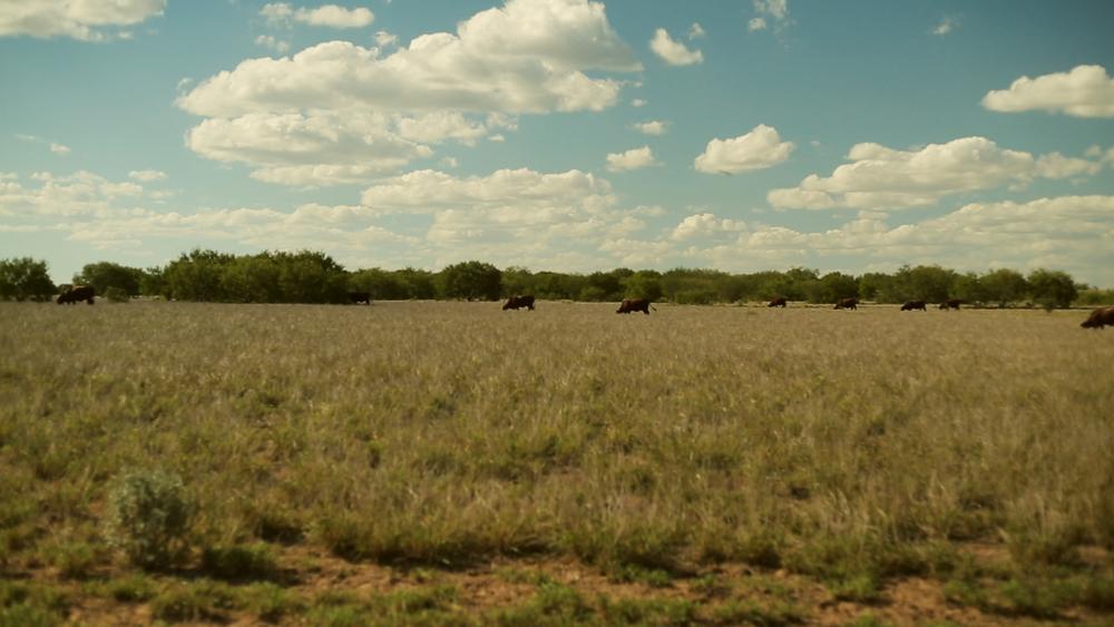 Estrella Ranch.00_01_30_44514.Still041.jpg