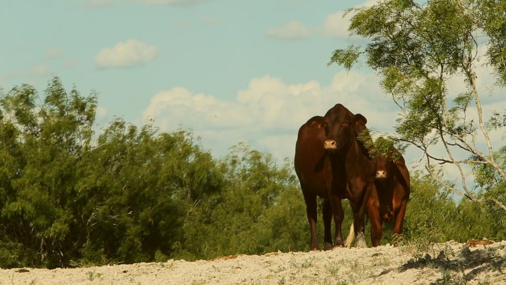 Estrella Ranch.00_01_36_13873.Still045.jpg