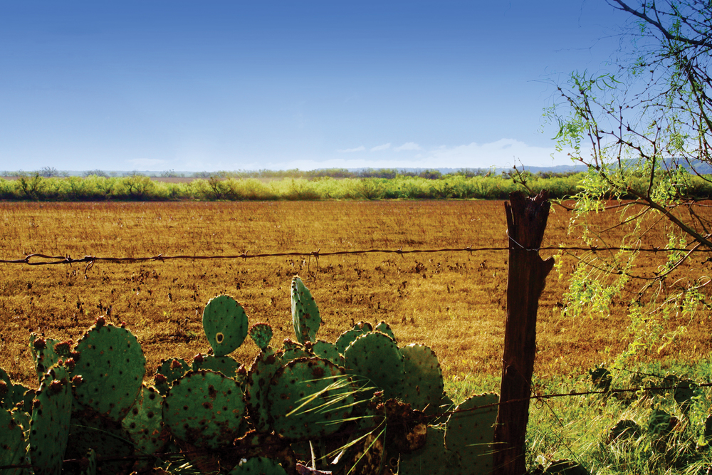 SALT GAP FARM 640± Acres | McCulloch County | Texas Property ID: 3226060 | $1,760,000