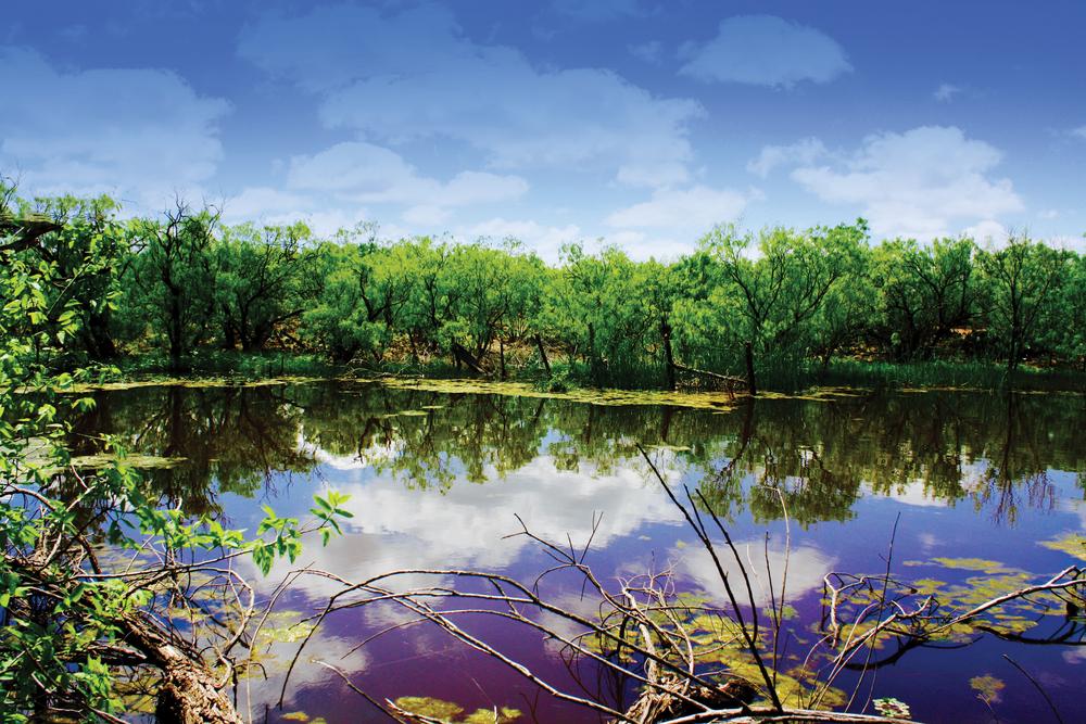 HUNTING TRACT 319.52± Acres | Jones County | Texas Property ID: 3226057 | $640,000