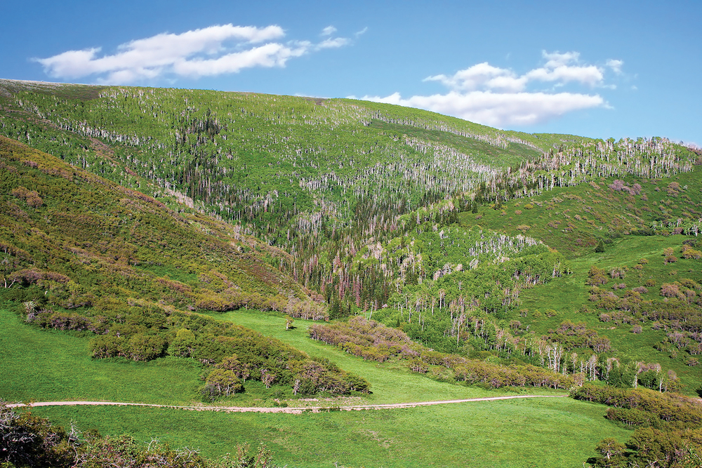BIG MOUNTAIN RANCH 3,549± Acres | Meeker, CO Property ID: 2872432 | $12,500,000