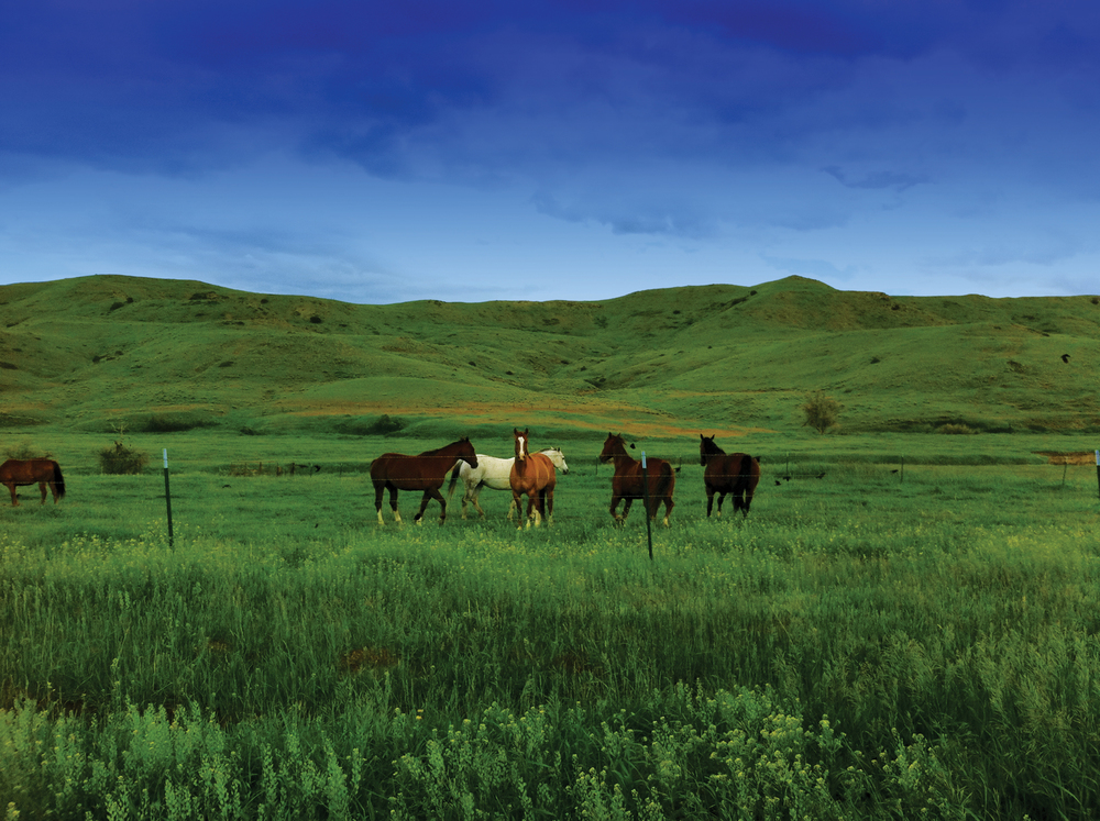 RED LODGE CREEK RANCH 1,489± Acres | Red Lodge, MT Property ID: 3238693 | $3,300,000