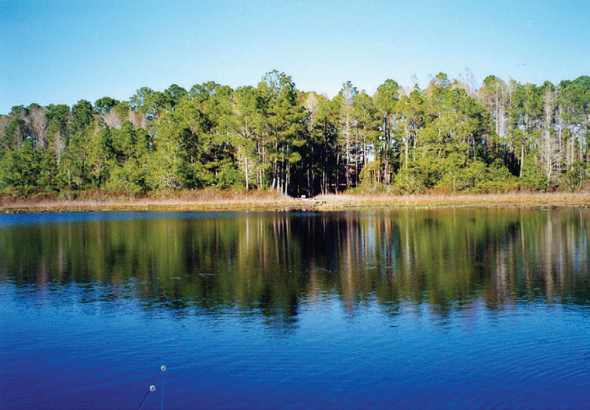 INSPIRED BY NATURE 123± Acres | Marion County, Florida Property ID: 2896603 | $1,899,000