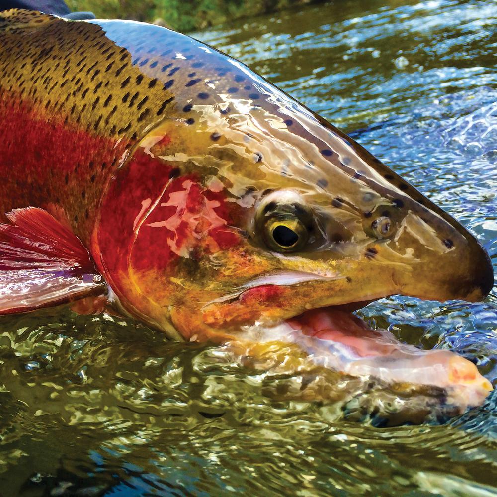 Bristol-Mountain-Fish-EDIT.jpg