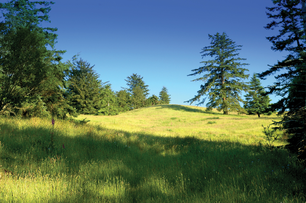 OREGON COAST RANCH 300± Acres | Curry County, OR Property ID: 2815628 | $1,950,000