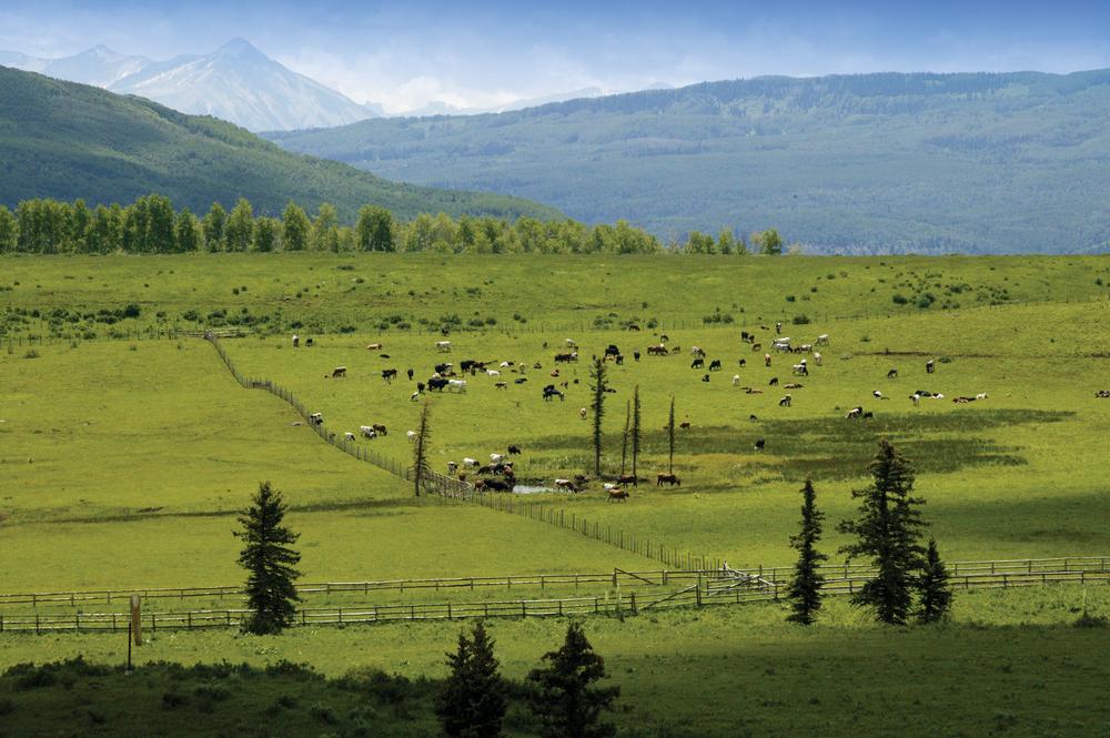 Big-View-Cows-EDIT.jpg