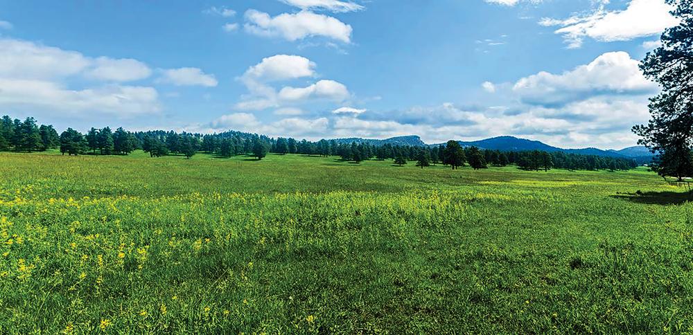 CENTAUR MOUNTAIN RANCH 456± Acres | Evergreen |Colorado Property ID: 3245182 | $6,900,000