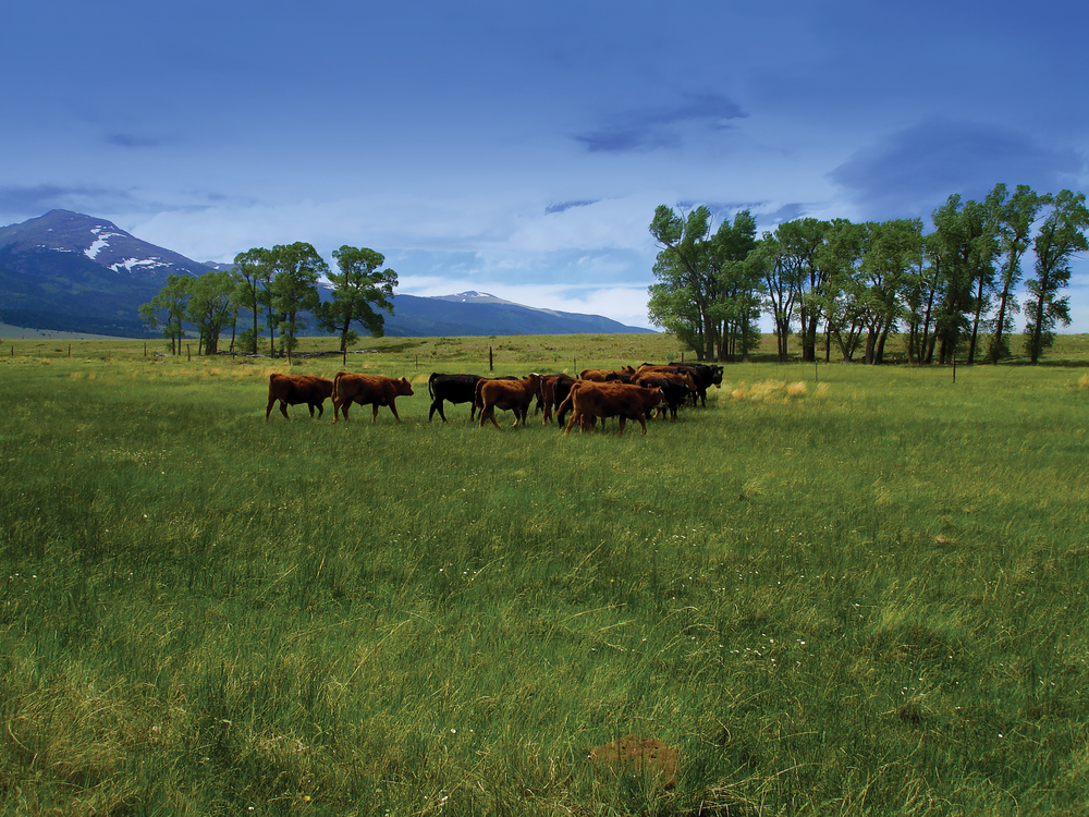 ULA MEADOWS RANCH 178.2± Acres | Custer County, CO Property ID: 3209201 | $545,000