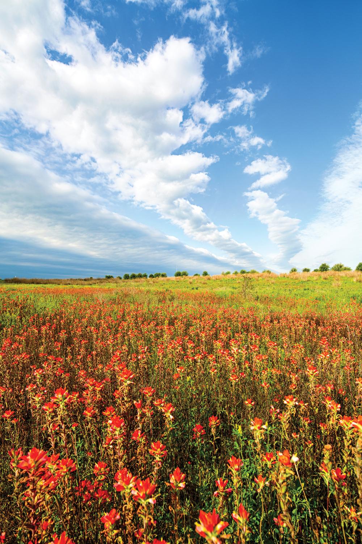 Sandow-wildflowers-full-size-19-EDIT.jpg