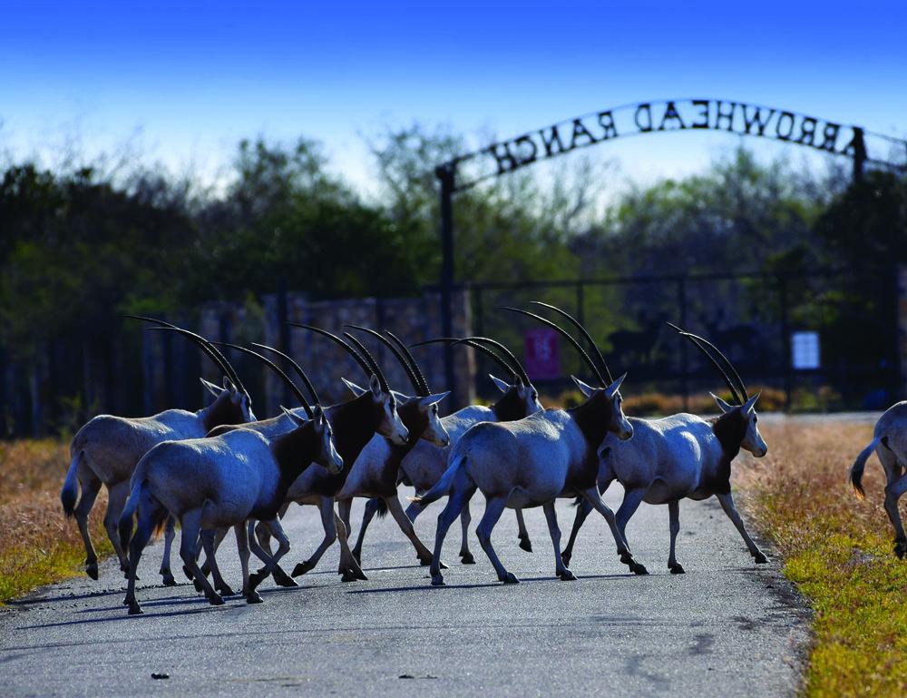 oryx-EDIT.jpg