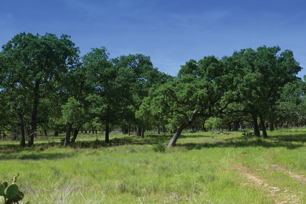 37± ACRE TRACT •$440,000