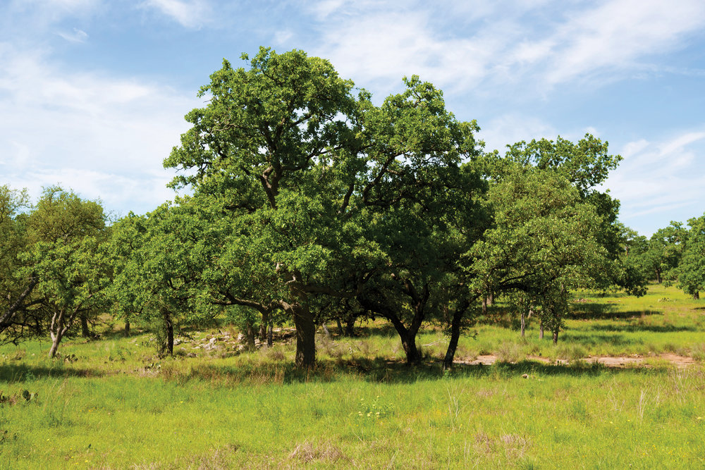 20.7± ACRE TRACT •$269,100