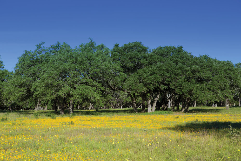 50± ACRE TRACT • $569,595