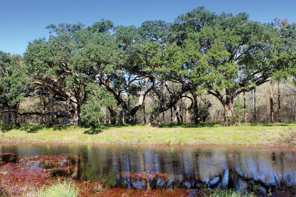 SELKIRK ISLAND RANCH 608± Acres | Matagorda County, TX Property ID: 2976342 | $3,154,650