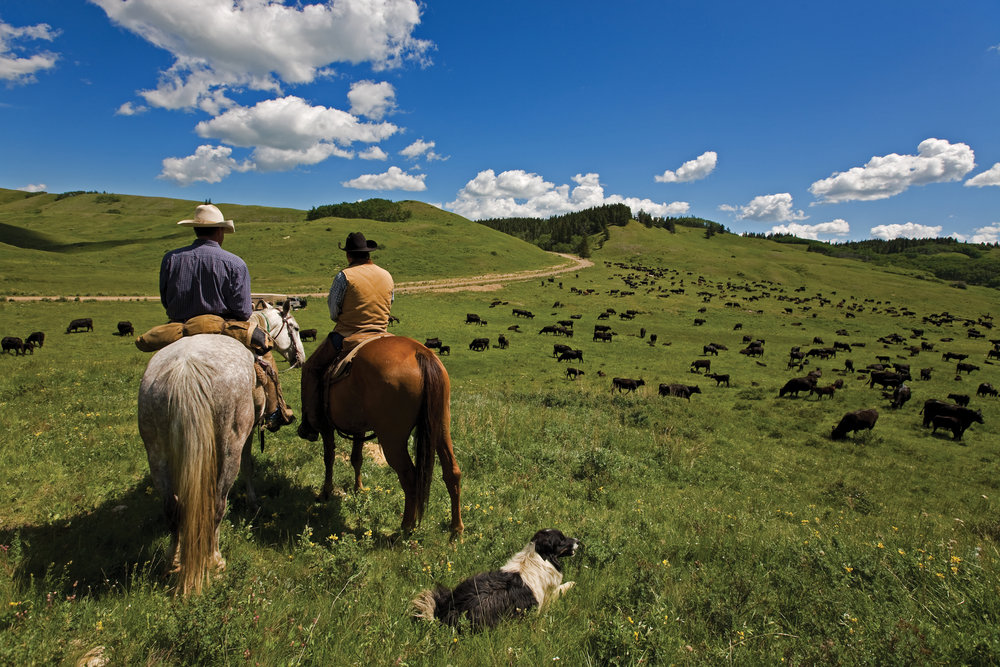 WESTERN RANCH BIG GAME LICENSES<strong><a href=http://www.landmagazines.com/sport-1/western-ranch-big-game-licenses>More</a>