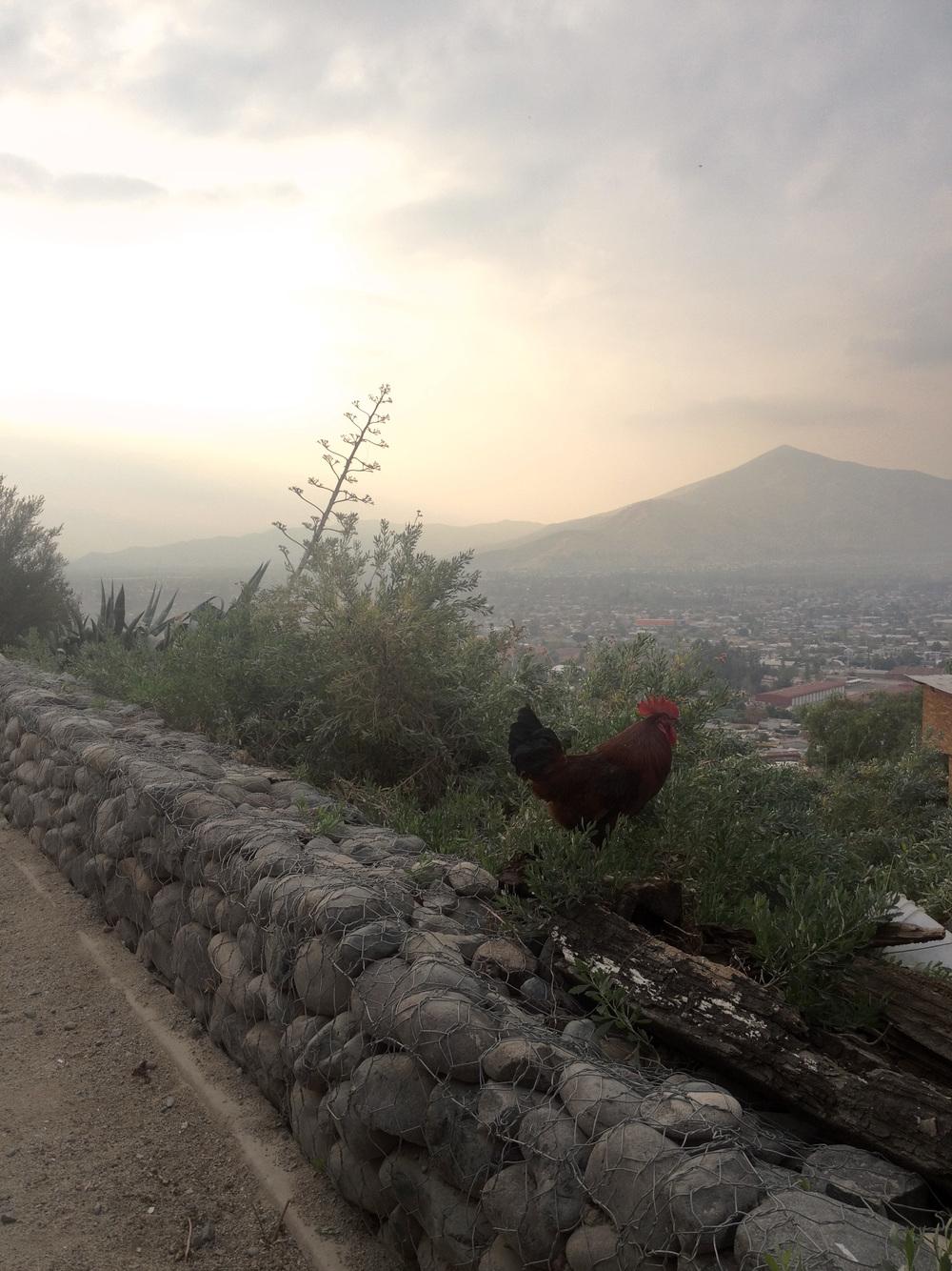 (6) Vista hacia el Cerro Renca desde Sendero Rústico   © Francisca Salas P. para LOFscapes.