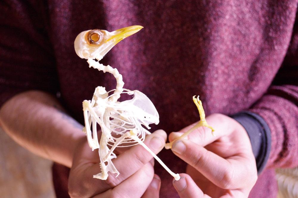 (5) Integrante de Museo de Historia Natural de Río Seco realizando demostraciones para talleres naturalistas de su programa educativo ©Museo de Historia Natural de Río Seco para  LOFscapes