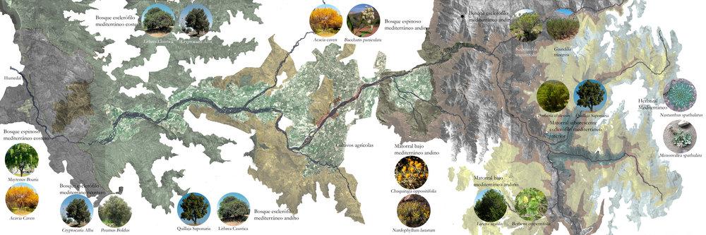 (2) Pisos Vegetacionales de la cuenca del río Maipo © Montserrat Castro U. para LOFscapes.