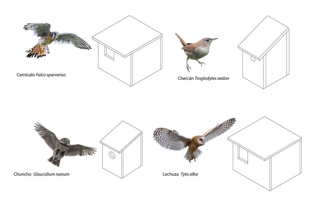 (3) Prototipos de casas anideras para aves de los Cerros de Renca © Paisaje Táctico + Renca Nativa + Semillas paraLOFscapes.