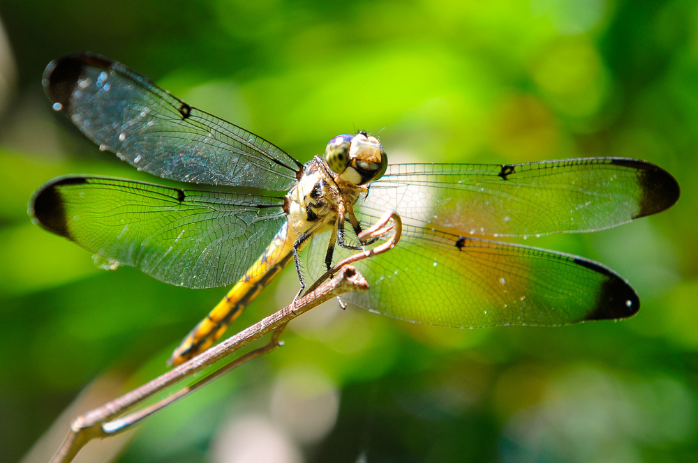 Wildlife Photography Dragonfly.jpg