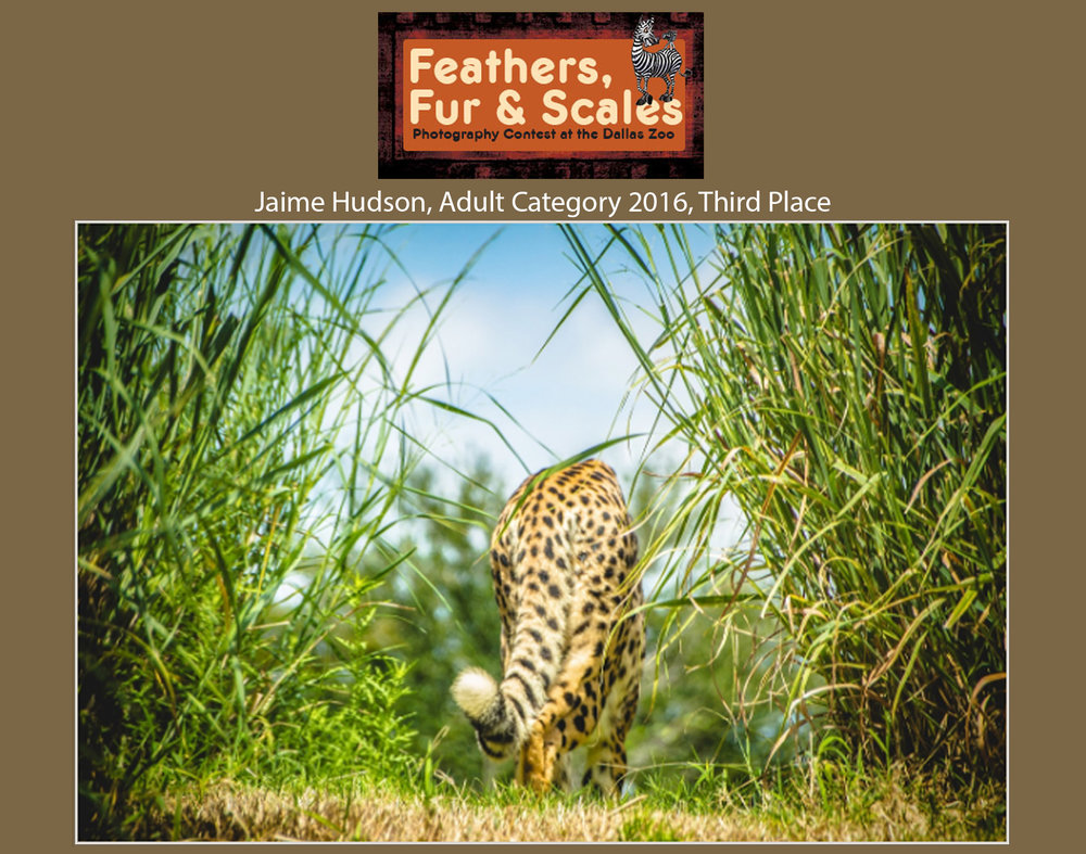 2016 Feathers, Furs and Scales Photography Contest Winner