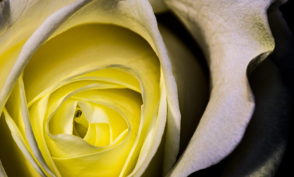 9. Floral
