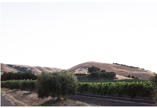 Sonoma Vineyard Wedding 11