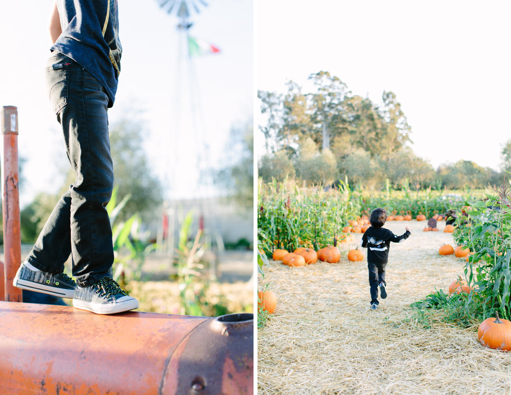family photos pumpkin patch napa 2.jpg