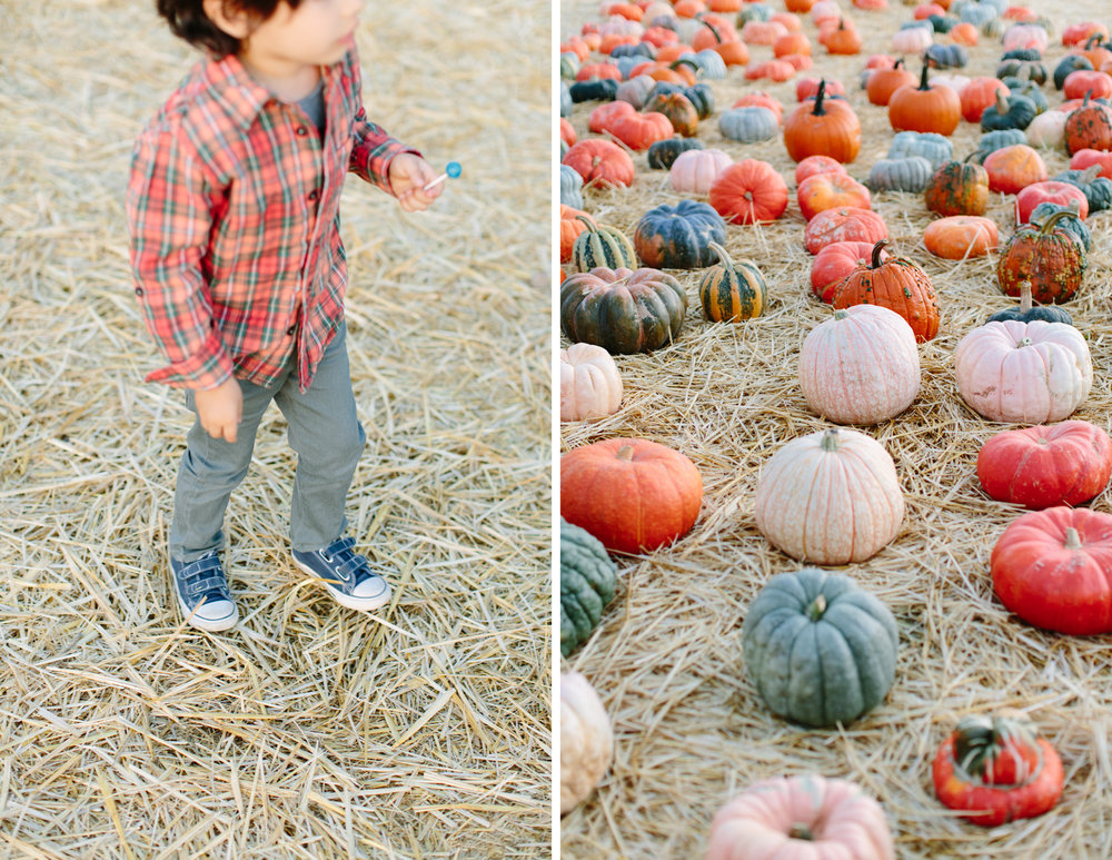 family photos pumpkin patch napa 7.jpg