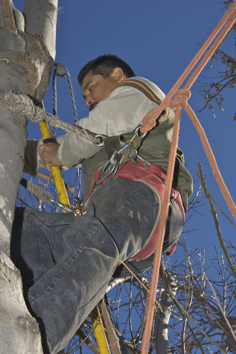 Rope, arborist, climbing