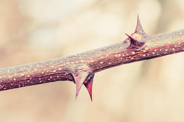 thorns-938231_640.jpg