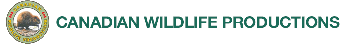 Canadian Wildlife Productions