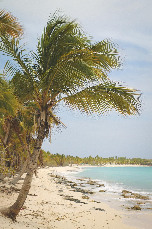 haiti4-2.jpg