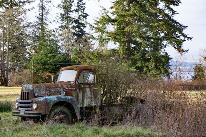I love old trucks in a random field. Yes, that is the ocean back there in the background.  Farm life meets coastal living!