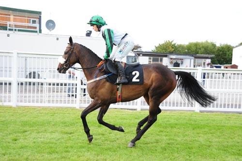 Going topostat Listowel (Photo courtesy of Healy Racing)