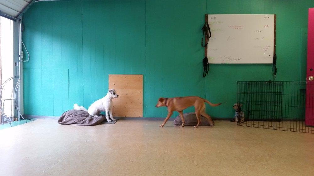 dogdaycare_vancouver
