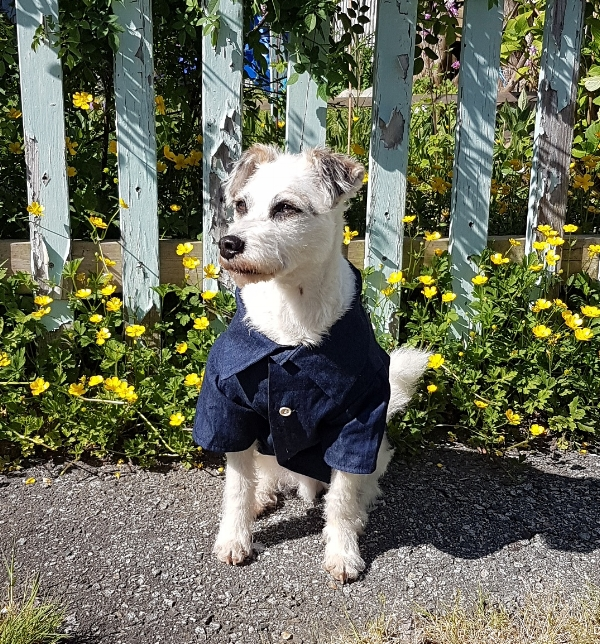 Dog Threads  - Dog Threads: Modern Dog clothing with good vibes!  All Dog Threads shirts are made in the USA.  From sizes XS - L, your dog is going to look better than you!